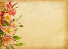 Old paper  with alstroemeria. Royalty Free Stock Image