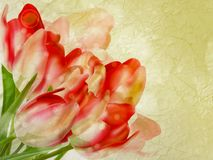 Old paper background with beautiful tulips. EPS 10 Stock Images