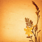 Old paper background with crocosmia Stock Photography