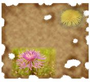 Old paper background with dandelion Royalty Free Stock Images
