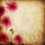 Old paper background with flowers Royalty Free Stock Photos