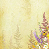 Old paper background with hand drawn flowers on border Stock Images