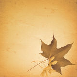 Old paper background with maple leaf and seeds. Antique, background, border, brown, corner, damaged, dry, fibers, flower, grunge, old, paper, printed, sepia Royalty Free Stock Images