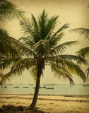 Old paper background with palm Royalty Free Stock Image