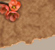 Old paper background with red flower Royalty Free Stock Photo