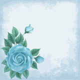 Old paper background with roses Royalty Free Stock Images