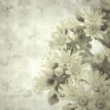 Old paper background. Textured stylish old paper background, square, with Aeonium flowers stock photos