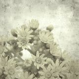 Old paper background. Textured stylish old paper background, square, with Aeonium flowers royalty free stock photography