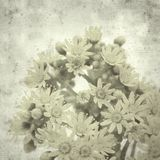 Old paper background. Textured stylish old paper background, square, with Aeonium flowers stock photo