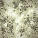 Old paper background. Textured stylish old paper background, square, with Aeonium flowers royalty free stock photos