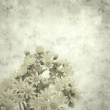 Old paper background. Textured stylish old paper background, square, with Aeonium flowers stock images