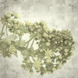 Old paper background. Textured stylish old paper background, square, with Aeonium flowers stock photography