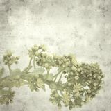 Old paper background. Textured stylish old paper background, square, with Aeonium flowers royalty free stock images