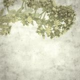 Old paper background. Textured stylish old paper background, square, with Aeonium flowers royalty free stock image