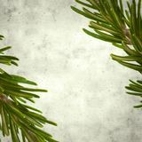 Old paper background. Textured stylish old paper background, square, with young rosemary twigs royalty free stock photography