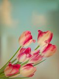 Old paper background with tulips. EPS 10 Stock Photography