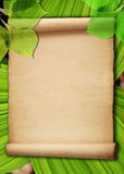 Old Paper Background With Green Leaves Stock Photography