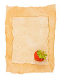Old paper and berry Stock Images