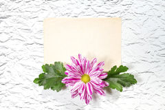 Old Paper with Chrysanthemum. Royalty Free Stock Images