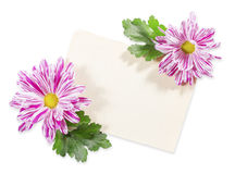 Old Paper with Chrysanthemum Stock Photography