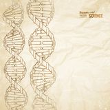 Old paper with dna. Stock Image