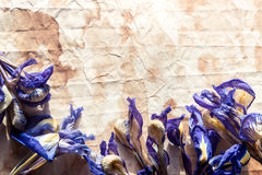 Old paper with dried iris flowers Royalty Free Stock Photography