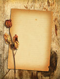 Old paper with dried rose Royalty Free Stock Photography