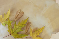 Old paper with dry autumn leaves Royalty Free Stock Image