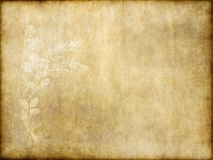 Old paper with floral design Stock Images