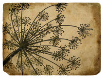 Old paper with floral element dill. The texture of old paper with floral element dill Royalty Free Stock Image