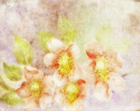 Old Paper Floral Texture Royalty Free Stock Image