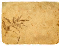Old paper with a flower in a graphic style Royalty Free Stock Photos