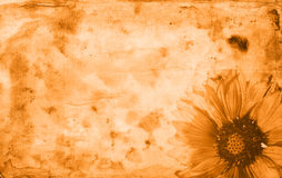 Old paper flower textures Stock Photos