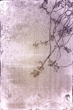 Old paper flower textures Royalty Free Stock Photography