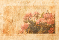 Old paper with frame and shabby flower pattern.  Royalty Free Stock Photo