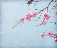 Old paper with the image of a blossoming branch. Stock Photography
