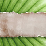 Old paper on leaf background. Royalty Free Stock Photography