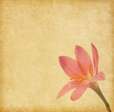 Old  paper  with light pink lily Royalty Free Stock Photos