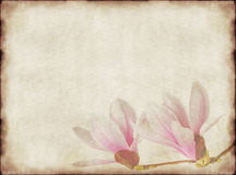 Old paper and magnolias Royalty Free Stock Photos