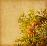 Old paper with Orange Branch. Stock Photos