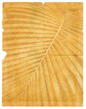 Old paper with page torn textured palm leaf Stock Photo