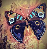 Old paper with painted butterfly Royalty Free Stock Photo