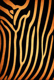 Old paper pattern, zebra Stock Photo