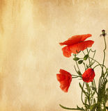 Old  paper with poppies Stock Photography