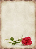Old paper and rose Royalty Free Stock Photo