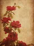 Old paper with roses Royalty Free Stock Images