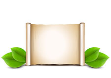 Old paper scroll and green leaves  on white background. Stock Images