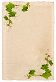 Old paper sheet with vine leaves ornament isolated Royalty Free Stock Photos