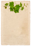 Old paper sheet with vine leaves ornament isolated on white Royalty Free Stock Photography