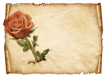 Old paper sheet, Vintage aged old paper with rose Royalty Free Stock Images